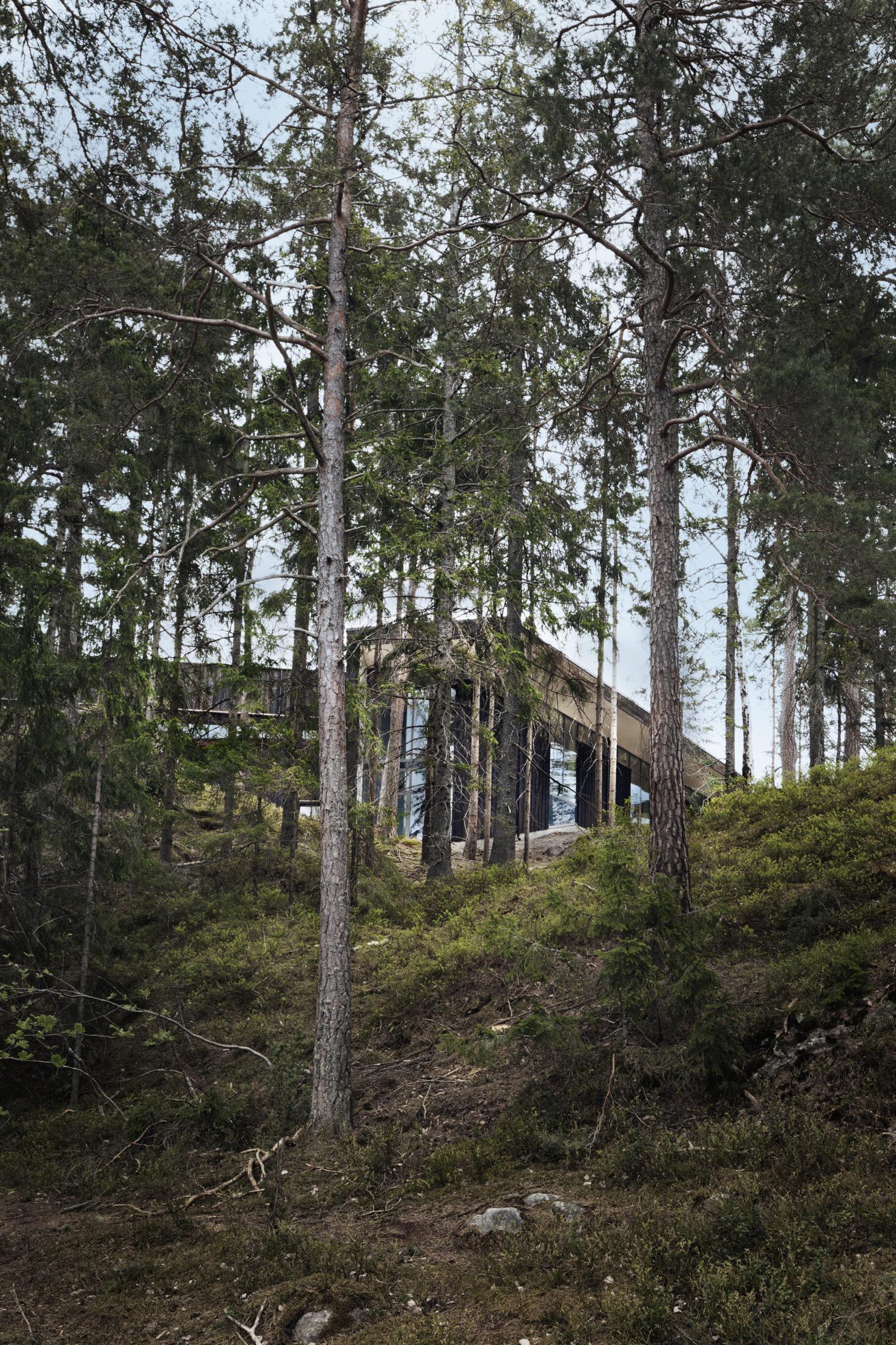 Konsthallen Artipelag på Värmdö med naturnära placering bland höga tallar.