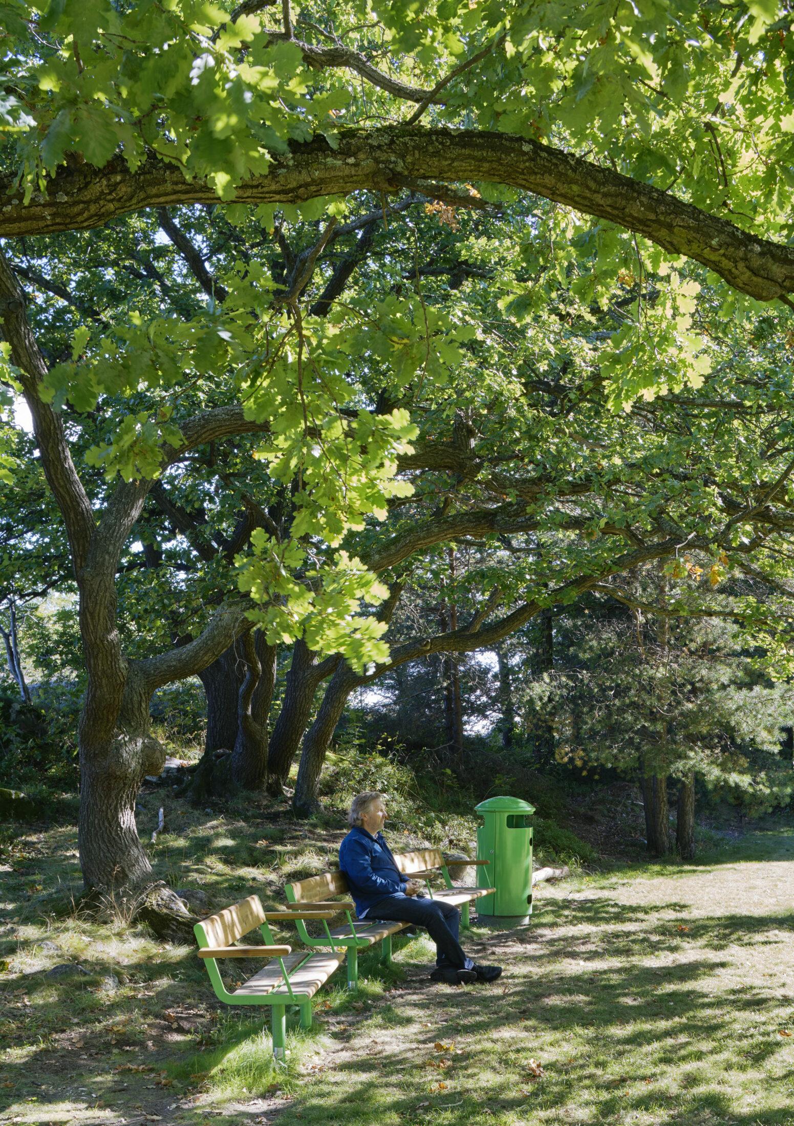 Den stora eken i Årstabergsparken ger härlig skugga.