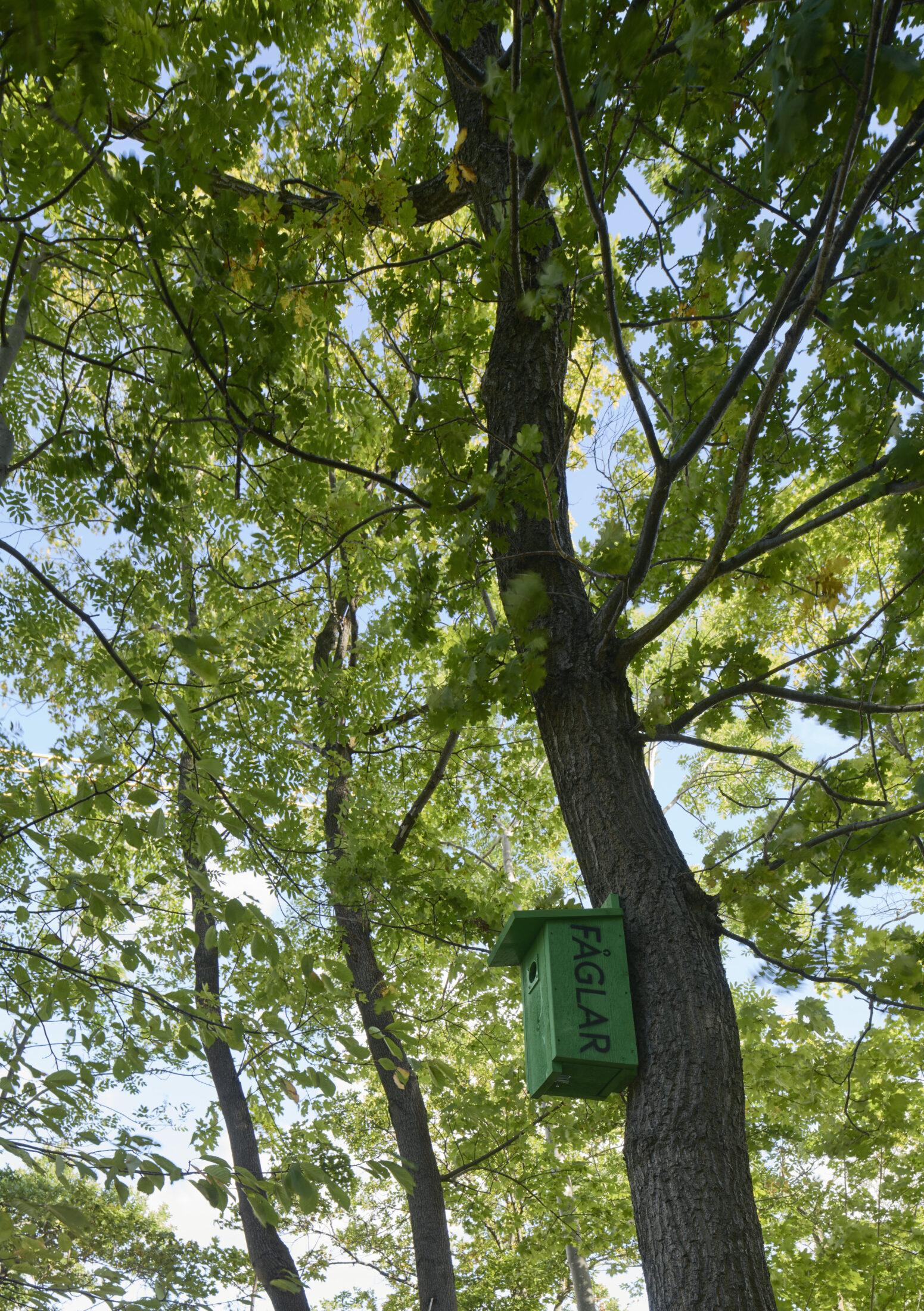 Grön fågelholk högt upp på en trädstam